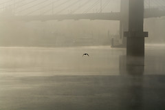 Out of the Fog. (Omygodtom) Tags: scene scenic senery setting gloomy fog nature nikon70300mmvrlens d7100 port river willamette oregon weather winter
