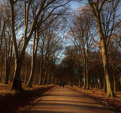 Low winter sun (Ingrid0804) Tags: lowwintersun forest wood trees path
