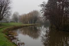 Foggy day on the Wey-F1220412-Edit (tony.rummery) Tags: em5mkii fog guildford mft microfourthirds omd olympus reflections riverwey surrey trees winter england unitedkingdom