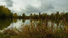Herbst am Teich  (3) (berndtolksdorf1) Tags: deutschland thüringen landschaft landscape teich wasser himmel outdoor jahreszeit herbst