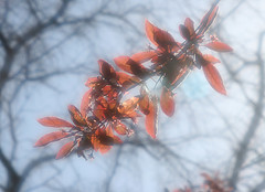 Inhaling the moments of Spring (Dieversa) Tags: hazy haze spring tree leaves sky light happiness