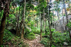 Starting point of the Uthuwankanda Hike. Beautiful road covered with leaves through a small forest. I felt very relaxed and closer to nature. #TKclicks #wanderlust #beautifullanka #mountain #rock #uthuwankanda #mawanella #saradiyel #srilanka #srilankadail (TKClicks) Tags: ifttt instagram starting point uthuwankanda hike beautiful road covered with leaves through small forest i felt very relaxed closer nature tkclicks wanderlust beautifullanka mountain rock mawanella saradiyel srilanka srilankadaily nikon nikontop