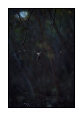 This work is 2/21 works taken on 2019/12/28 (shin ikegami) Tags: sony ilce7m2 a7ii sonycamera 50mm lomography lomoartlens newjupiter3 tokyo 単焦点 iso800 ndfilter light shadow 自然 nature naturephotography 玉ボケ bokeh depthoffield art artphotography japan earth asia portrait portraitphotography