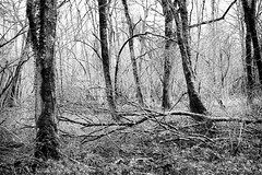 Obstacle (patoche21) Tags: bourgogne bourgognefranchecomte cotedor chevignystsauveur dxo europe france monochrome nature paysage forêt hiver nb noiretblanc patrickbouchenard bw blackandwhite forest tree wood winter burgundy landscape