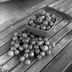 Today's Harvest (Eddie La Mole) Tags: cherrytomatoes blackandwhite monochrome film 120 6x6 squareformat trix xtol