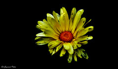 seb_7073 (Seb Guyomard Photos) Tags: flower fleur nature sweet beauty beaute france art ambiance nikon sigma