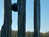 2020 01 21_Campbell Park_0052