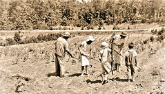 'African American' family working a cotton field  ca1980 NARA RG16-H-009-01-di1399 (over 21 MILLION views Thanks) Tags: africanamerican cotton historical minority sharecropper