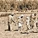 'African American' family working a cotton field  ca1980 NARA RG16-H-009-01-di1399