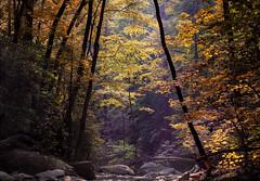 Morning Forest (NspiredPhotos) Tags: forest pisgah national north carolina nc woodland woods landscape nature autumn foliage colors