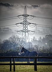 Horse Power! (nerd.bird) Tags: horse pylon fence field trees fog