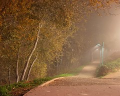 Foggy path (Marisa Bosqued) Tags: niebla fog sendero path árbol tree luces lights noche night bestcapturesaoi elitegalleryaoi aoi