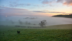 A misty sunrise (moniquerebanks) Tags: fog landscape landschaft landschap labrador dawn sunrise mist nikond7100 scenery nature dog cumbria lakedistrict merengebied unesco worldheritage nevel mistlagen atmospheric