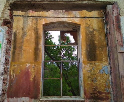 Frame inside a Frame inside a Frame Framing a Tree