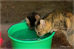 auront-ils assez à boire ? (philippedaniele) Tags: maroc imouzzer moyenatlas habitat chat habitattroglodyte