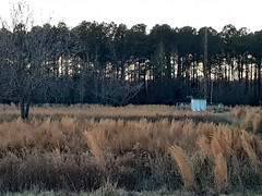 Field In Winter. (dccradio) Tags: fairmont nc northcarolina robesoncounty outdoor outdoors outside field pasture meadow weeds grass tallgrass tree trees branch branches treebranch treebranches sky eveningsky january winter samsung galaxy sma205u a20 cellphone cellphonepicture tuesday tuesdayevening evening goodevening