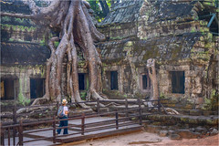 Ta Prohm, Angkor area, Cambodia (Janos Kertesz) Tags: cambodia temple religion tree old stone architecture asia angkor wat ancient cambodian buddhism khmer jungle ta prohm