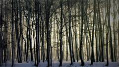 Nature... Silesia (lucjanglo) Tags: tychy poland europe europa polska silesia nature trees winter zima park