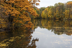 Pond View D75_1397 (iloleo) Tags: frognerpark pond reflection autumn fall trees colourful nature foliage landscape nikon d750 oslo norway