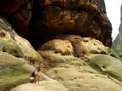 Viel Sandstein und Pauli (isajachevalier) Tags: hund dog tier haustier landschaft felsen elbsandsteingebirge sächsischeschweiz sachsen panasonicdmcfz150
