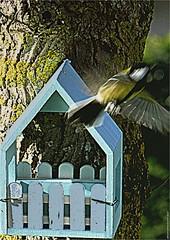 AY 398 (cadayf) Tags: 33 girobde kargin garden home oiseau bird mésange tit