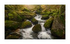 West Okement River, Dartmoor, Devon, UK (SimonHMiles) Tags: dartmoor moor landscape river stream water flow rock boulder tree trees wood woods forest mist fog morning nikon z7 2470