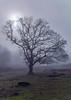 Hartlebury Common in mist