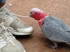 Player (francis_erevan) Tags: bird chaussure oiseau