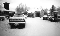 back yard (Foide) Tags: snow winter backyard grainy grain