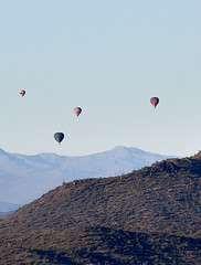Jan 23 - 45 of 112 1 (Verde River) Tags: hotairballoons landscape landscapes bird birds phainopepla woodpecker thrush cactuswren cactus kieslingfalcon gambelsquail deer muledeer nature