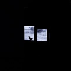 "Remembering ""Birdy"". (angelmuji) Tags: ventanas"