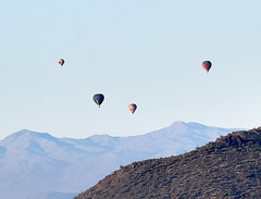 Jan 23 - 49 of 112 (Verde River) Tags: hotairballoons landscape landscapes bird birds phainopepla woodpecker thrush cactuswren cactus kieslingfalcon gambelsquail deer muledeer nature