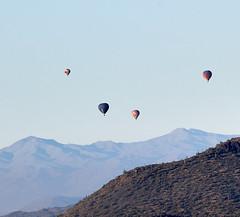 Jan 23 - 48 of 112 (Verde River) Tags: hotairballoons landscape landscapes bird birds phainopepla woodpecker thrush cactuswren cactus kieslingfalcon gambelsquail deer muledeer nature