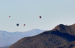 Jan 23 - 47 of 112 1 (Verde River) Tags: hotairballoons landscape landscapes bird birds phainopepla woodpecker thrush cactuswren cactus kieslingfalcon gambelsquail deer muledeer nature