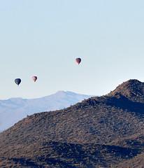 Jan 23 - 46 of 112 (Verde River) Tags: hotairballoons landscape landscapes bird birds phainopepla woodpecker thrush cactuswren cactus kieslingfalcon gambelsquail deer muledeer nature