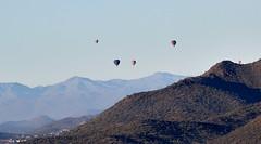 Jan 23 - 47 of 112 (Verde River) Tags: hotairballoons landscape landscapes bird birds phainopepla woodpecker thrush cactuswren cactus kieslingfalcon gambelsquail deer muledeer nature