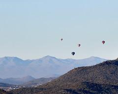 Jan 23 - 45 of 112 (Verde River) Tags: hotairballoons landscape landscapes bird birds phainopepla woodpecker thrush cactuswren cactus kieslingfalcon gambelsquail deer muledeer nature