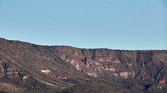 Jan 23 - 32 of 112 (Verde River) Tags: hotairballoons landscape landscapes bird birds phainopepla woodpecker thrush cactuswren cactus kieslingfalcon gambelsquail deer muledeer nature