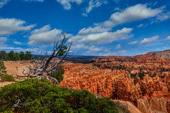 Bryce Canyon in Southern Utah (JuanJ) Tags: nikon d850 lightroom photoshop luminar art bokeh lens light landscape happy naturephotography nature people white green red black pink skyportrait location architecture building city square squareformat instagramapp shot awesome supershot beauty cute new flickr amazing photo photograph fav favorite favs picture me explore interestingness friends dof sunset sky flower night tree flowers portrait fineart sun clouds utah canyon hoodoo hiking brycecanyon nationalpark park