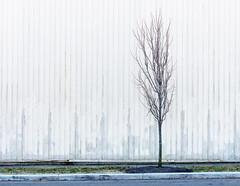 Tree (J Wells S) Tags: nakedtree tree bare urban norwood cincinnati ohio minimalist