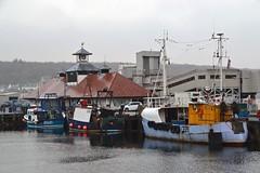 (Zak355) Tags: rothesay isleofbute bute scotland scottish harbour fishingboat fishingboats riverclyde rothesayharbour