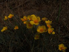 (Abyssmadis) Tags: flores nature campo chile