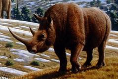 Anglų lietuvių žodynas. Žodis woolly rhinoceros reiškia gauruotas raganosių lietuviškai.