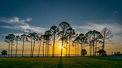 SINKING SUN (photogtom43) Tags: nikond3300 sigma1020afhsm portstjoe florida sunset clouds outdoors trees palmtrees nature pinetrees water