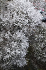 ice on trees - hoarfrost - Raufrost - Raureif - (eagle1effi) Tags: canon7dmarki canoneos7d eos7d dslr eagle1effi hoarfrost raufrost raureif 7d excellent photo 7dbest bestof 2020 canon7d canon