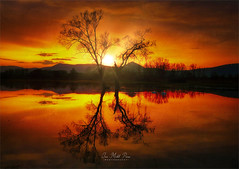 Gold tree (Jean-Michel Priaux) Tags: paysage nature landscape tree trees sunset sun orange priaux reflect double duo hot shadow savage fire river selestat vosges alsace france gold