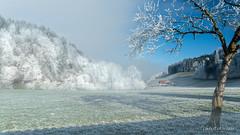 Féérie hivernale (Switzerland) (christian.rey) Tags: givre brouillard soleil campagne landscape fribourgoise fribourg sony alpha a7r2 a7rii 24105 hiver winter swiss pratzey latuffière