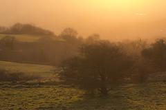 Sunset mists (Tony Buckley) Tags: canon6d canon canonef24105mmf4lisusm sunset somerset deerleap mist tree orange