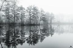 another foggy day... (st.weber71) Tags: wasser wasserspiegelung nikon nrw niederrhein natur nebel deutschland d850 germany schwarzweis wetter bäume blackandwhite winter art