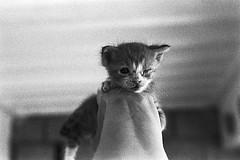 fm2_27_12 (Ghostwriter D.) Tags: analog nikonfm2 blackandwhite blackwhite bw cat kitten gatito gato spain españa islascanarias canaryisland tenerife teneriffa 2018